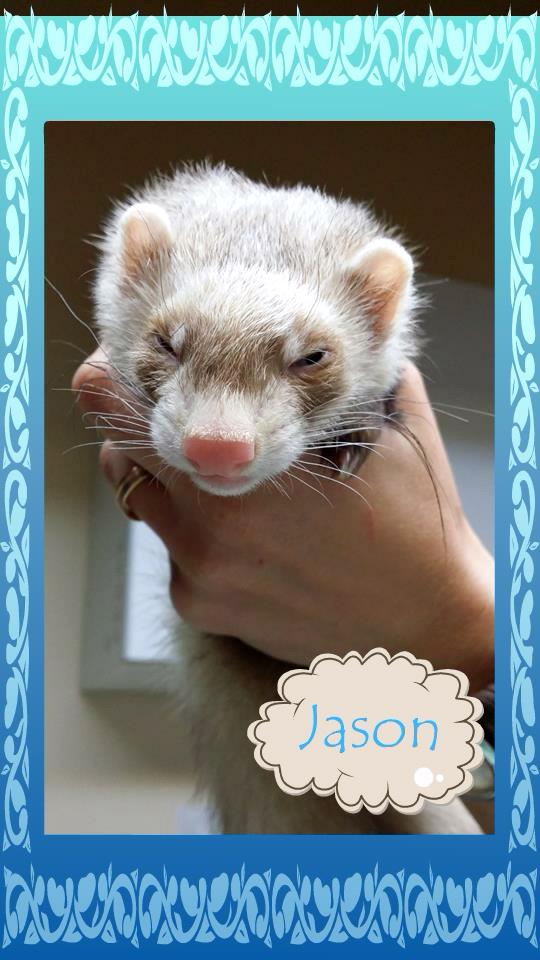 Jason, rebaptisé SCRATTY, mâle putoisé 10799610