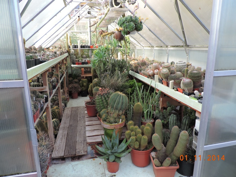 Cacti and Sukkulent in Köln, every day new flowers in the greenhouse Part 112 Bild_101
