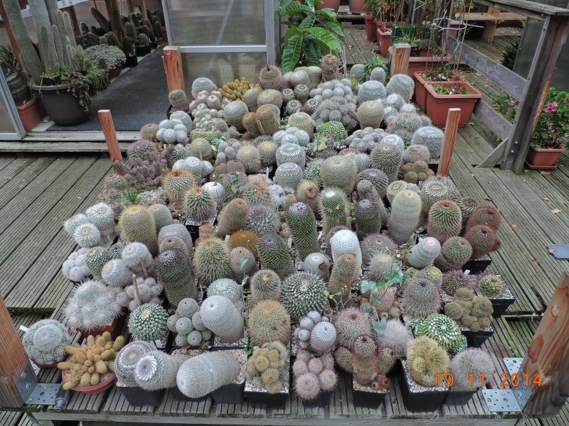 Cacti and Sukkulent in Köln, every day new flowers in the greenhouse Part 112 Bild_102
