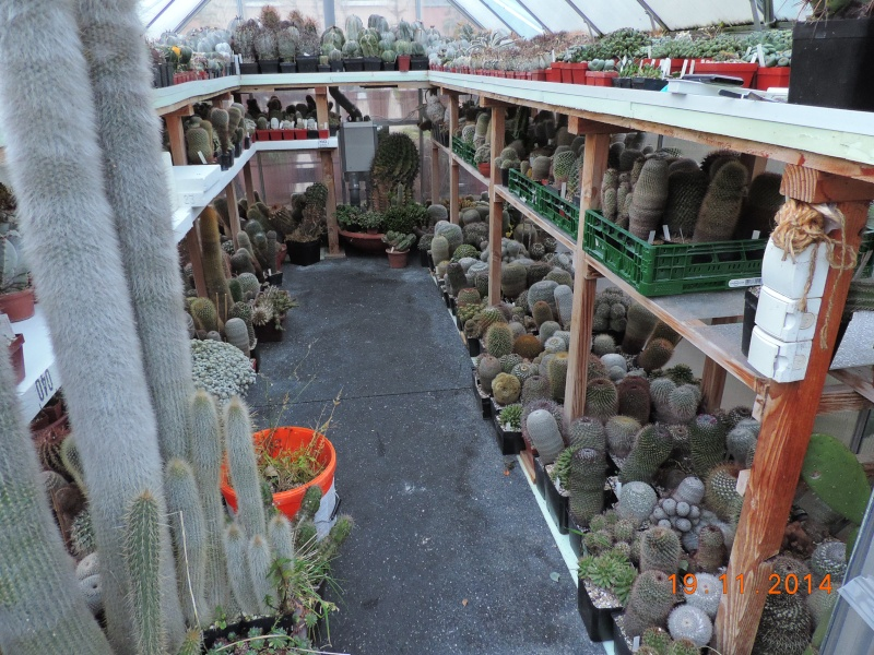 Cacti and Sukkulent in Köln, every day new flowers in the greenhouse Part 112 Bild_104
