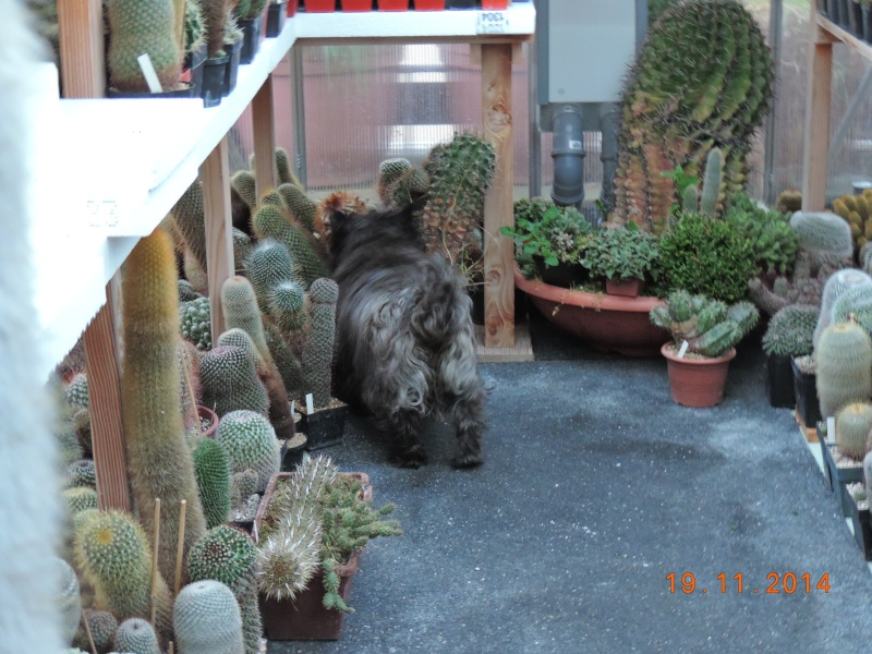 Cacti and Sukkulent in Köln, every day new flowers in the greenhouse Part 112 Bild_106