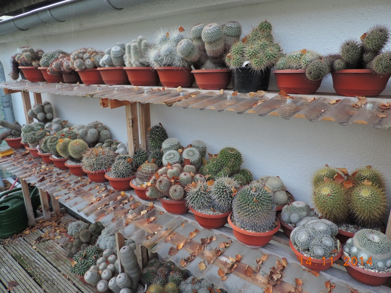 Cacti and Sukkulent in Köln, every day new flowers in the greenhouse Part 112 Bild_107