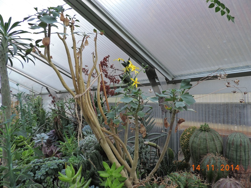 Cacti and Sukkulent in Köln, every day new flowers in the greenhouse Part 112 Bild_113