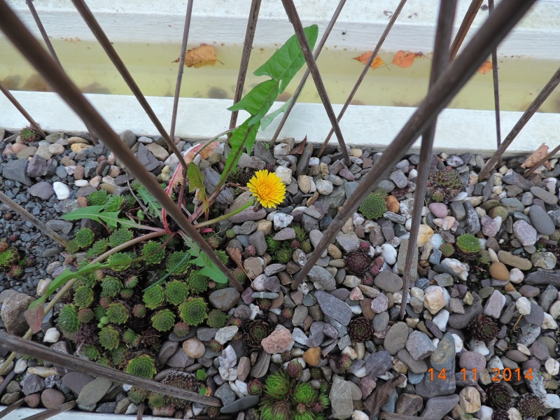 Cacti and Sukkulent in Köln, every day new flowers in the greenhouse Part 112 Bild_114