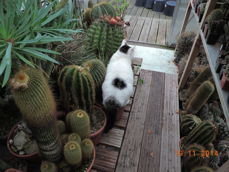 Cacti and Sukkulent in Köln, every day new flowers in the greenhouse Part 112 Bild_119
