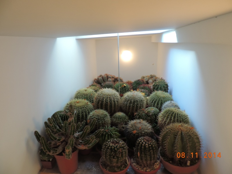 Cacti and Sukkulent in Köln, every day new flowers in the greenhouse Part 112 Bild_121