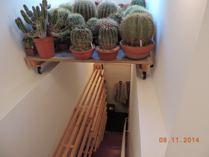 Cacti and Sukkulent in Köln, every day new flowers in the greenhouse Part 112 Bild_122
