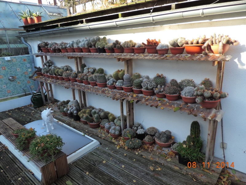 Cacti and Sukkulent in Köln, every day new flowers in the greenhouse Part 112 Bild_123