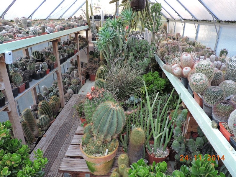 Cacti and Sukkulent in Köln, every day new flowers in the greenhouse Part 112 Bild_132