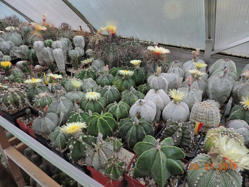 Cacti and Sukkulent in Köln, every day new flowers in the greenhouse Part 112 Bild_146