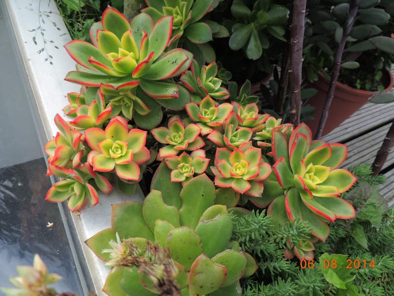 Cacti and Sukkulent in Köln, every day new flowers in the greenhouse Part 112 1/2 Bild_163