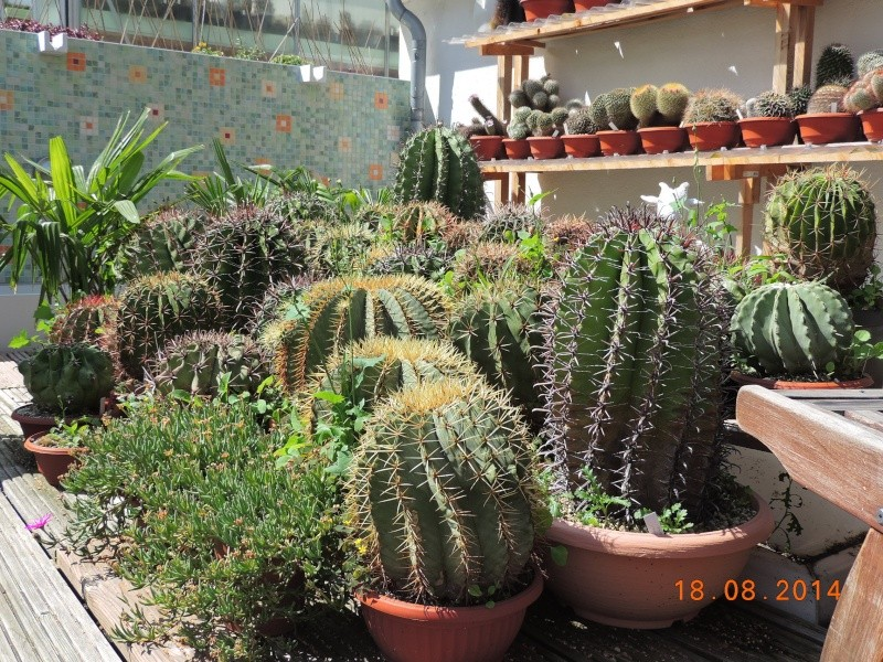 Cacti and Sukkulent in Köln, every day new flowers in the greenhouse Part 112 1/2 Bild_167
