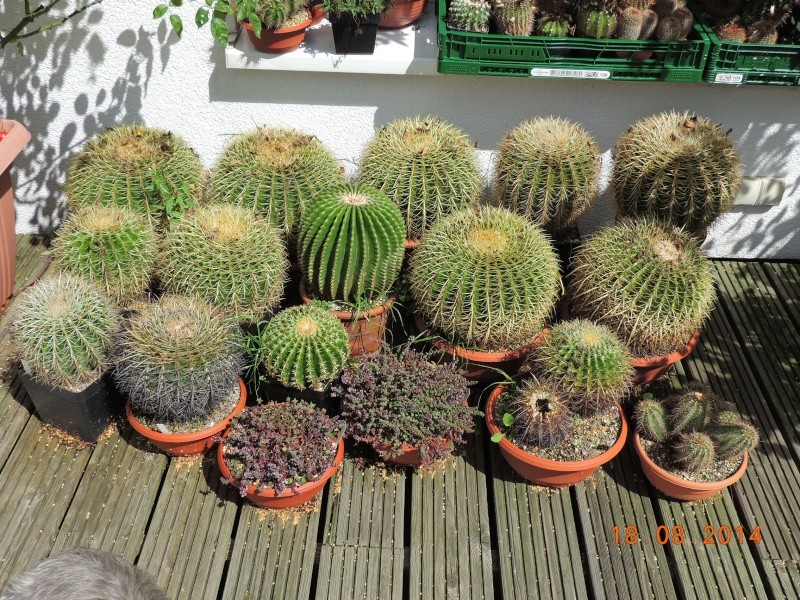 Cacti and Sukkulent in Köln, every day new flowers in the greenhouse Part 112 1/2 Bild_168