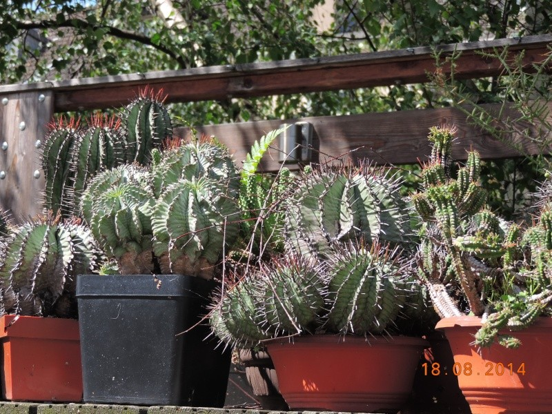 Cacti and Sukkulent in Köln, every day new flowers in the greenhouse Part 112 1/2 Bild_169