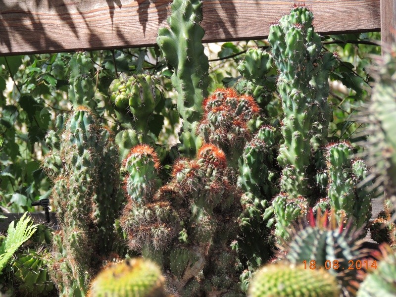 Cacti and Sukkulent in Köln, every day new flowers in the greenhouse Part 112 1/2 Bild_172