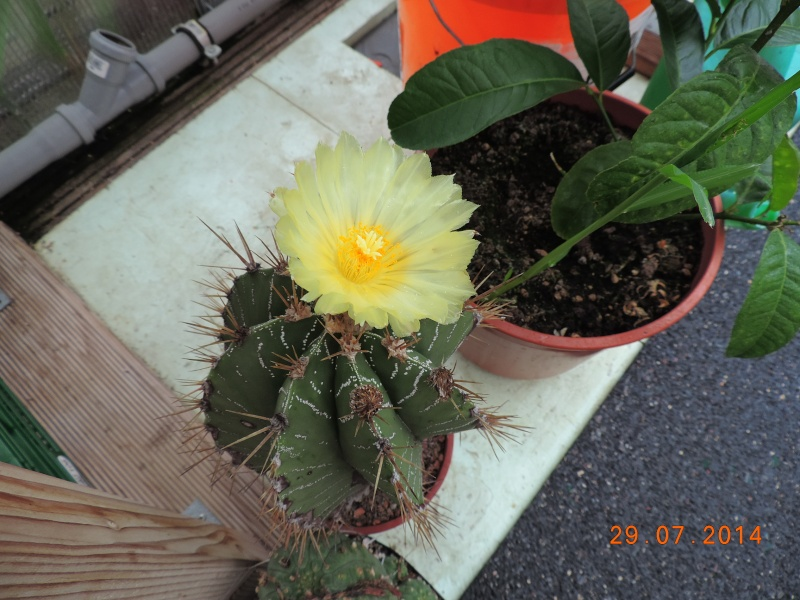 Cacti and Sukkulent in Köln, every day new flowers in the greenhouse Part 112 1/2 Bild_195