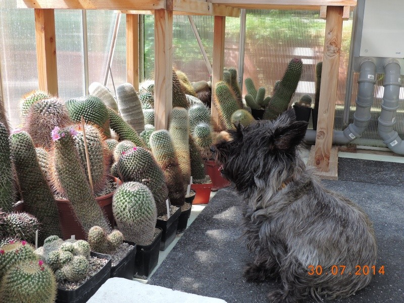 Cacti and Sukkulent in Köln, every day new flowers in the greenhouse Part 112 1/2 Bild_209