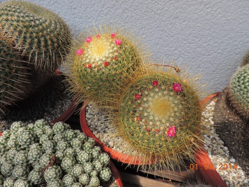 Cacti and Sukkulent in Köln, every day new flowers in the greenhouse Part 112 1/2 Bild_217