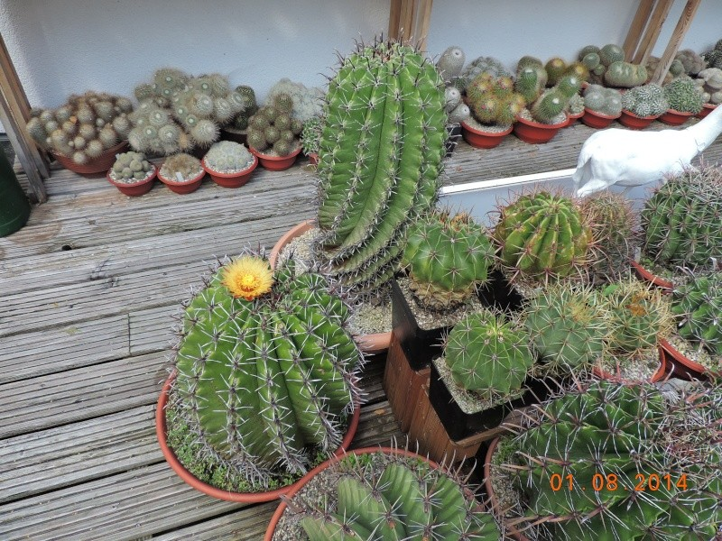 Cacti and Sukkulent in Köln, every day new flowers in the greenhouse Part 112 1/2 Bild_220