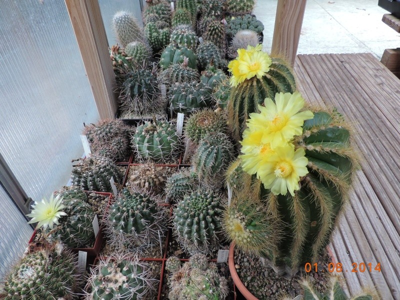 Cacti and Sukkulent in Köln, every day new flowers in the greenhouse Part 112 1/2 Bild_223