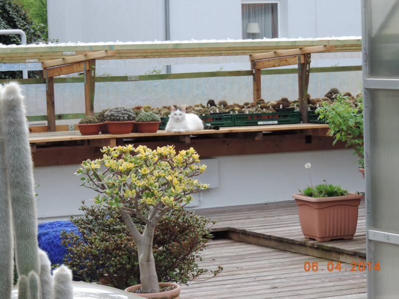 Cacti and Sukkulent in Köln, every day new flowers in the greenhouse Part 112 1/2 Bild_610