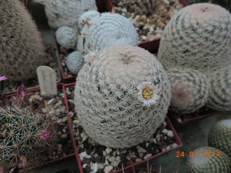 Cacti and Sukkulent in Köln, every day new flowers in the greenhouse Part 111   Bild_713