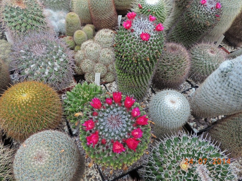 Cacti and Sukkulent in Köln, every day new flowers in the greenhouse Part 111   Bild_719