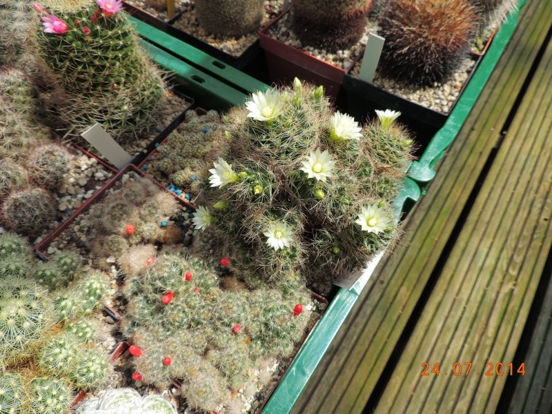 Cacti and Sukkulent in Köln, every day new flowers in the greenhouse Part 111   Bild_744