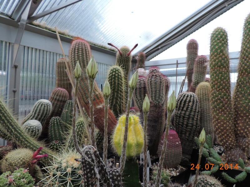 Cacti and Sukkulent in Köln, every day new flowers in the greenhouse Part 111   Bild_759