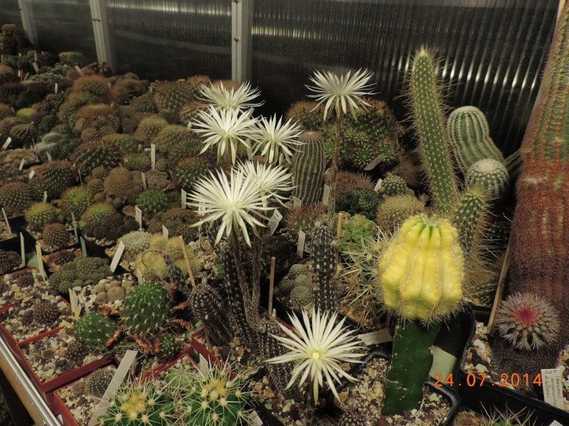 Cacti and Sukkulent in Köln, every day new flowers in the greenhouse Part 111   Bild_760