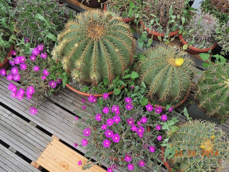 Cacti and Sukkulent in Köln, every day new flowers in the greenhouse Part 112 Bild_766