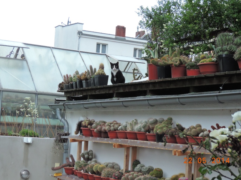 Cacti and Sukkulent in Köln, every day new flowers in the greenhouse Part 112 1/2 Bild_784
