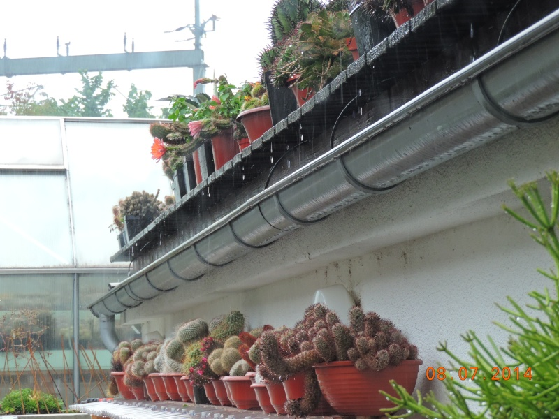 Cacti and Sukkulent in Köln, every day new flowers in the greenhouse Part 112 1/2 Bild_786