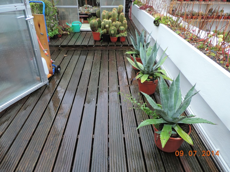 Cacti and Sukkulent in Köln, every day new flowers in the greenhouse Part 112 1/2 Bild_791