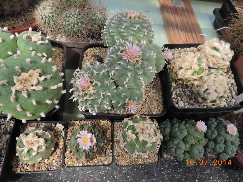 Cacti and Sukkulent in Köln, every day new flowers in the greenhouse Part 112 1/2 Bild_794