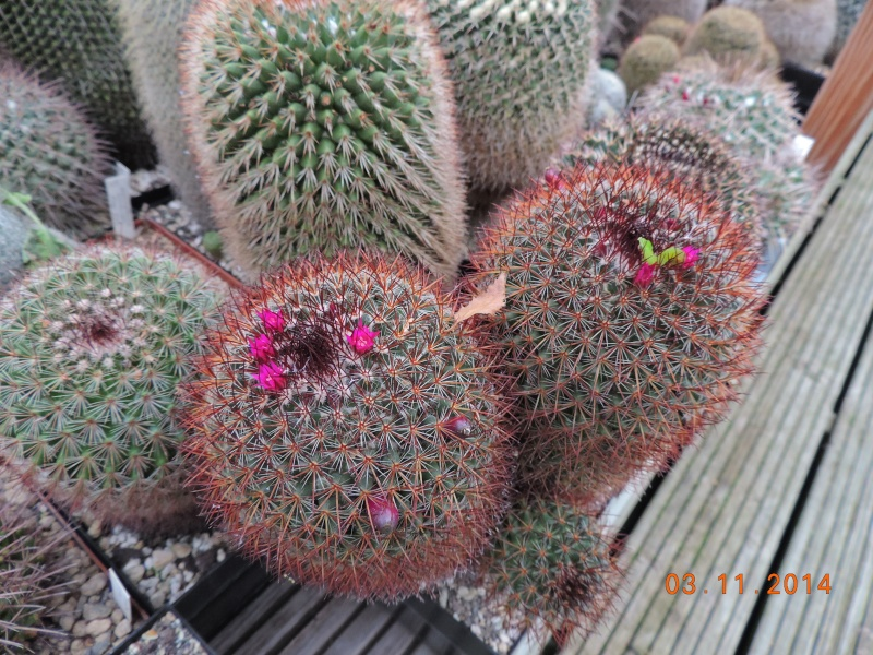 Cacti and Sukkulent in Köln, every day new flowers in the greenhouse Part 111   Bild_829