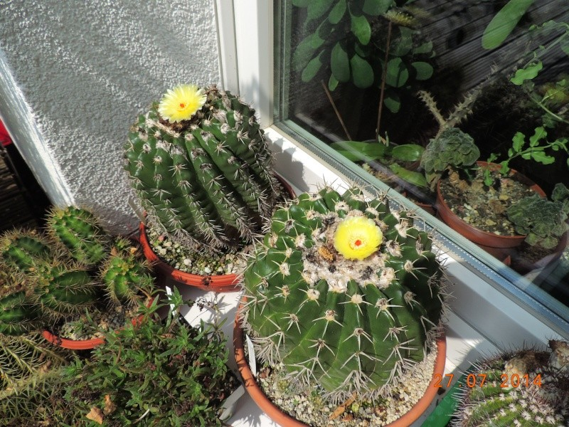 Cacti and Sukkulent in Köln, every day new flowers in the greenhouse Part 111   Bild_838