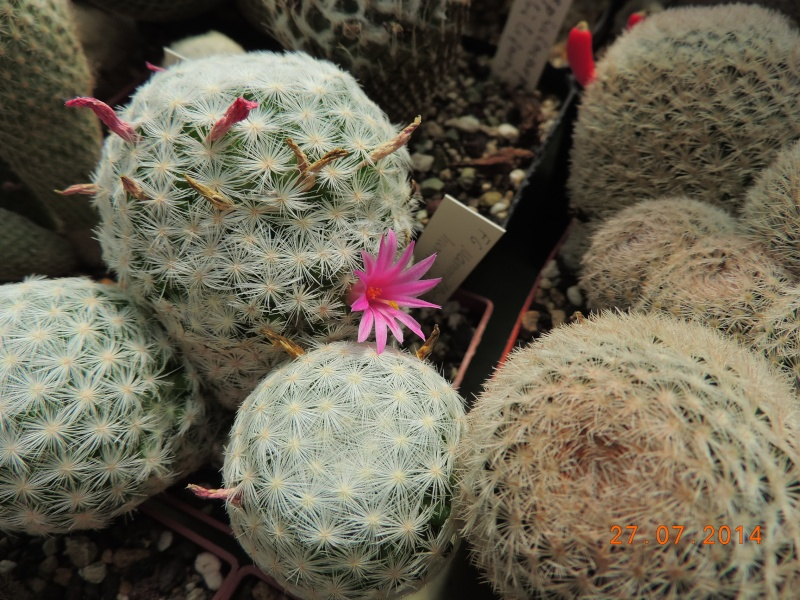 Cacti and Sukkulent in Köln, every day new flowers in the greenhouse Part 111   Bild_841