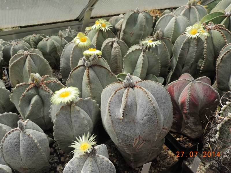 Cacti and Sukkulent in Köln, every day new flowers in the greenhouse Part 111   Bild_853