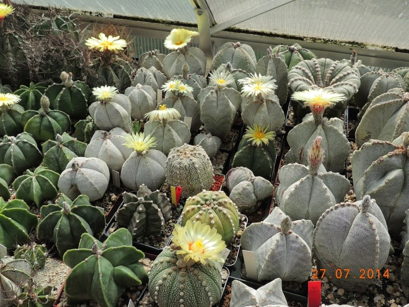 Cacti and Sukkulent in Köln, every day new flowers in the greenhouse Part 111   Bild_854