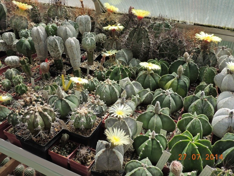 Cacti and Sukkulent in Köln, every day new flowers in the greenhouse Part 111   Bild_855