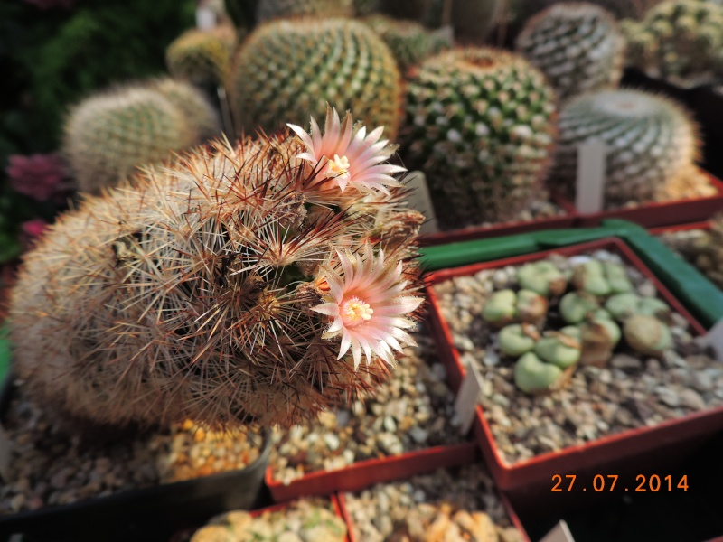 Cacti and Sukkulent in Köln, every day new flowers in the greenhouse Part 111   Bild_869