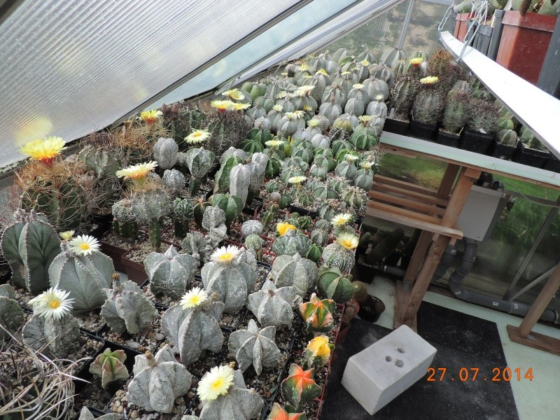 Cacti and Sukkulent in Köln, every day new flowers in the greenhouse Part 112 Bild_881
