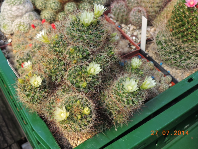 Cacti and Sukkulent in Köln, every day new flowers in the greenhouse Part 112 Bild_883