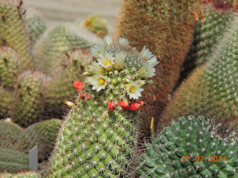 Cacti and Sukkulent in Köln, every day new flowers in the greenhouse Part 112 Bild_885