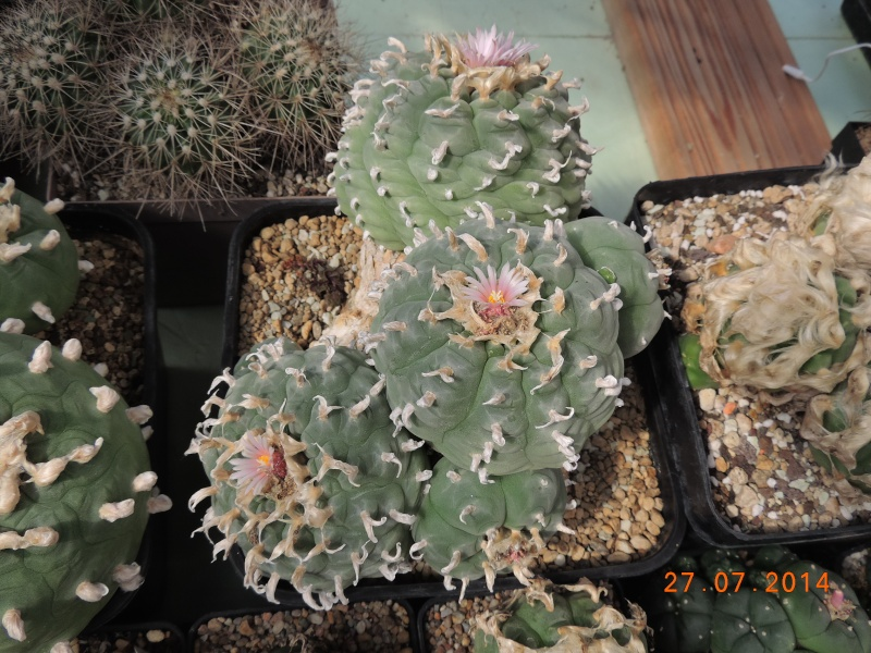 Cacti and Sukkulent in Köln, every day new flowers in the greenhouse Part 112 Bild_890