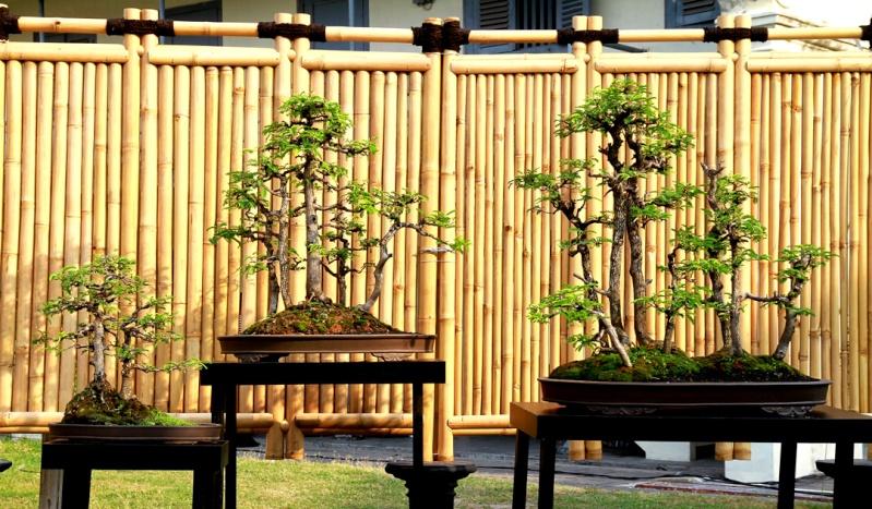 Multimedia Bonsai Presentation - IBA&CB 2014 14a10