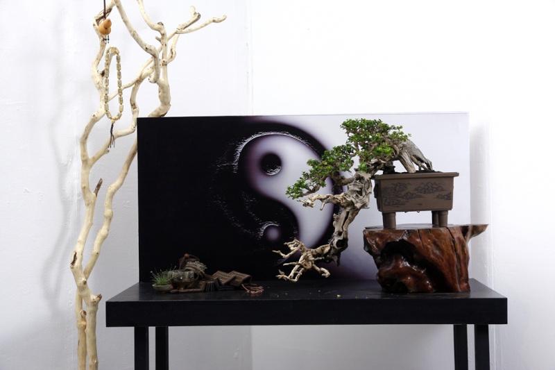 Multimedia Bonsai Presentation - IBA&CB 2014 2611