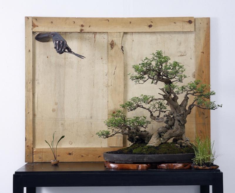 Multimedia Bonsai Presentation - IBA&CB 2014 3810