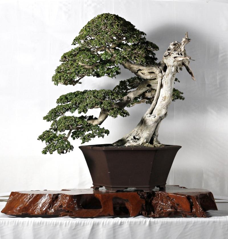 Multimedia Bonsai Presentation - IBA&CB 2014 3911